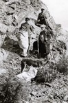 N.E. Hansen and two assistants gather specimens in their search for hardy peach trees in northern China in 1924