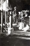 Man feeding chickens in Saolin in northern China in 1924
