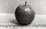 Apple specimen, undated by South Dakota State University