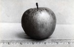 Apple specimen, undated