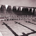 South Dakota State University Aqua Bunnies, 1979