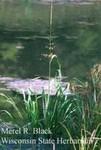 Zizania aquatica