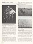 News from the South Dakota Memorial Art Center, Summer 1986